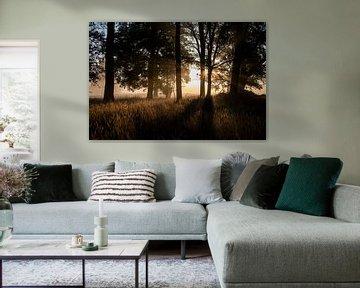 Eikenbos in Helvoirtse Broek bij zonsopkomst van Affect Fotografie