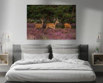Wunderschöne junge Rothirsche in den violetten Mooren von Merijn Loch