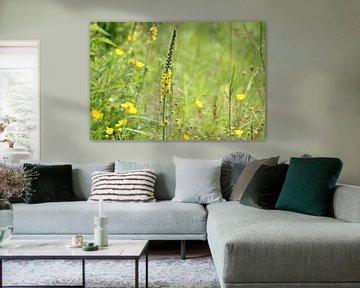 Gelbe Blumenwiese von Esther Leijten-Kupers