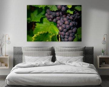 Blaue Weintrauben in der Sonne von Joachim Küster