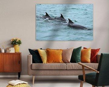 Tuimelaars Schotland (Dolfijn) van Merijn Loch