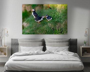 Papageientaucher-Familie von Merijn Loch