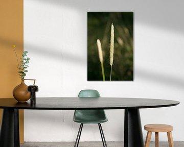 Plant van Michel Zwart