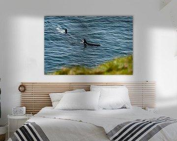 Orca's vanaf de Kliff op Schotland van Merijn Loch