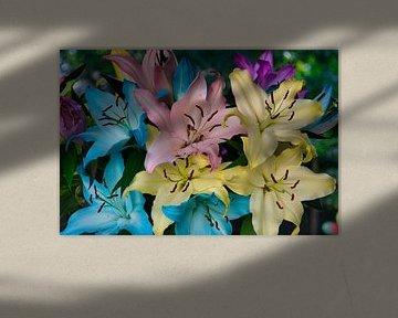 Een bos rainbow lelies vol in de bloei van JM de Jong-Jansen