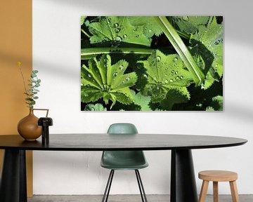 Frische Regentropfen auf einer Nahaufnahme eines grünen Blatts von MPfoto71