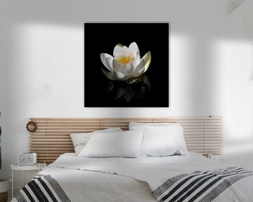 Witte waterlelie van Henk Zielstra