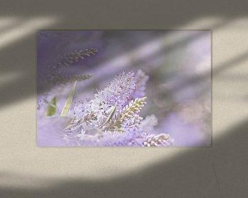 Bloem zacht paars dromerig van Anne Dellaert