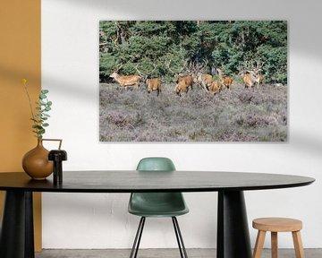 Grote groep mannetjes Edelhert van Merijn Loch