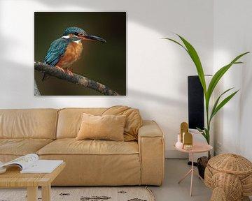IJsvogel met visje van Marjolein van Middelkoop