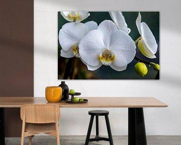 Fast perfekte Blüte von Harald Schottner