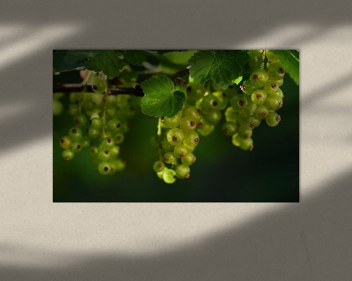 Sfeerimpressie: Groene bessen die aan een buitenstruik hangen van Ulrike Leone