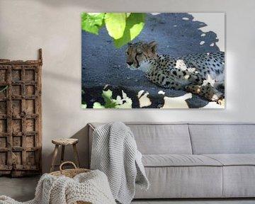 Cheetah (Jachtluipaard) van Merijn Loch