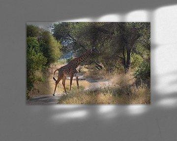 Girafe sur Koolspix
