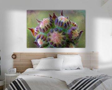 Winziges Blumen-Sedum von Rietje Bulthuis
