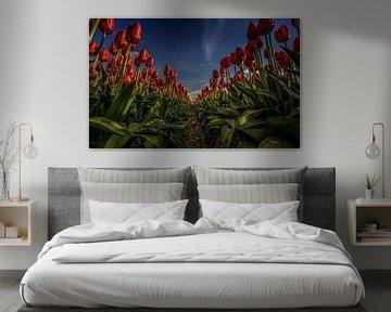 Rode tulpen in lijn