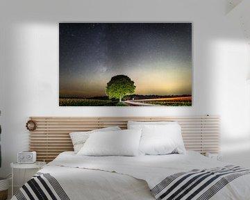 Markante boom bij nacht