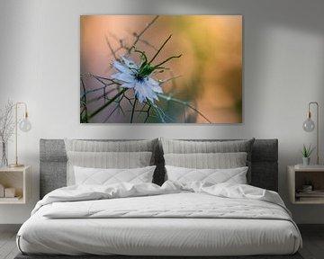 Weiß und Farbe von Tania Perneel