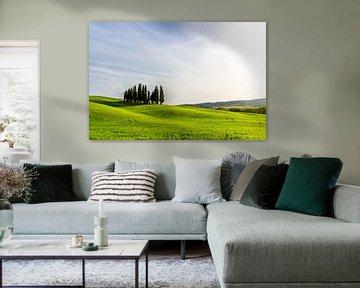 Heuvels met bomen in Toscane van Mickéle Godderis