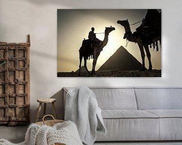 Kamele an den Pyramiden von Gizeh bei Kairo, Ägypten