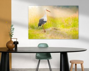 Weißstorch (Ciconia ciconia) Vogel mit ausgeprägten weißen und schwarzen Federn, der im Sommer auf e von Sjoerd van der Wal