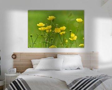 Butterblumen im Gras von Ad Jekel
