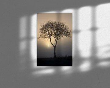 Gerade aufgehende Sonne durch Nebel und Bäume von Rene  den Engelsman