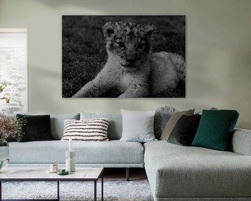 Löwenjunges von Kim de Vos  - Carpe Diem
