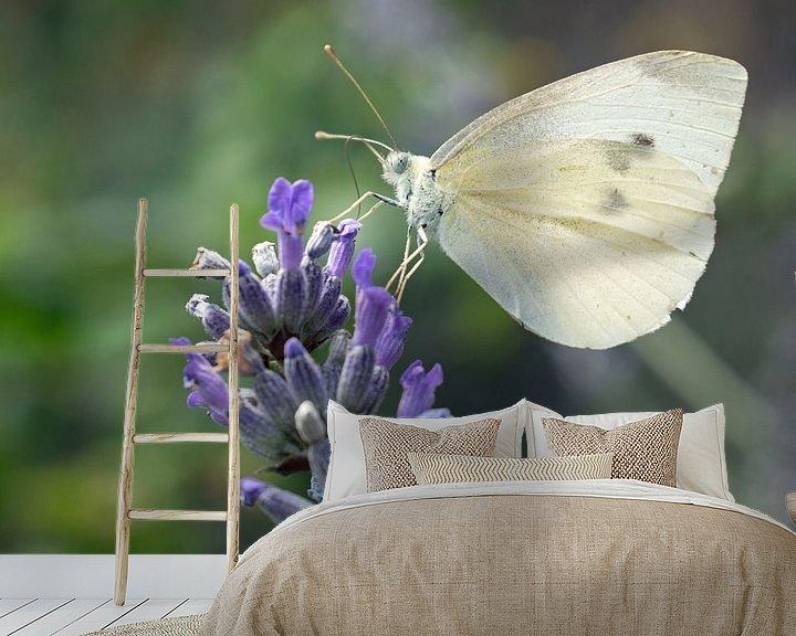 Impression: Petit chou blanc sur une branche de lavande sur Judith Cool