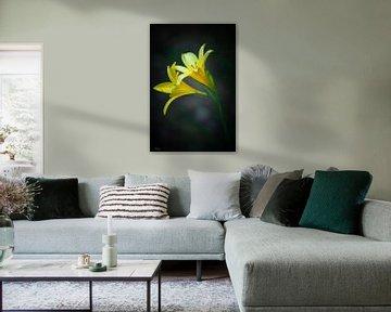 Gele daglelies (Daglelie) van Lily Ploeg