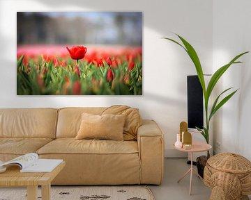 Rote Tulpen von Kim van der Plas