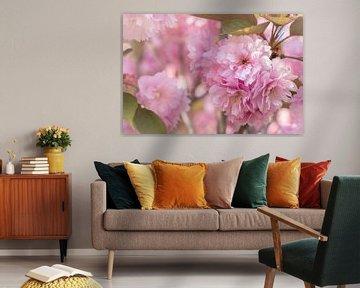 Roze bloesem tegen roze achtergrond