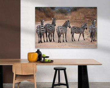 Gruppe von Zebras: fünf gestreifte Hosen von Koolspix