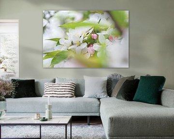 Blick durch zu weicher, weißer Blüte von Arja Schrijver Fotografie