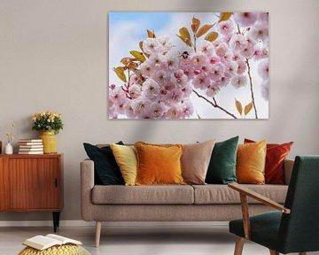 Rosa Blüte mit Hummel