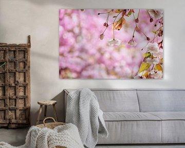Romantische weiße Blüte in Rosa von Arja Schrijver Fotografie