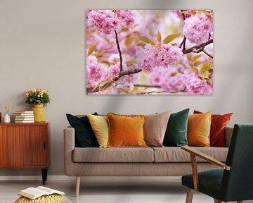 Rosa Blüte im Blütenbaum von Arja Schrijver Fotografie