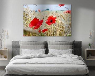 Mohn zwischen dem Weizen von Yana Spiridonova