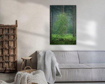 Een mooie frisse groene berkenboom tussen de varens. van Jos Pannekoek