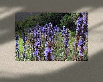 Paarse bloemen in park van Quinta Dijk