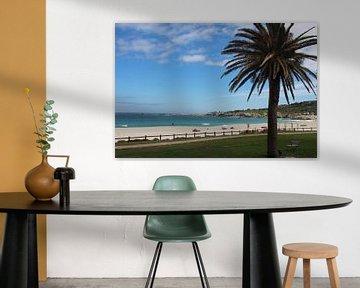 Palmboom op strand van Quinta Dijk