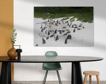 Pinguine am Strand von Quinta Dijk