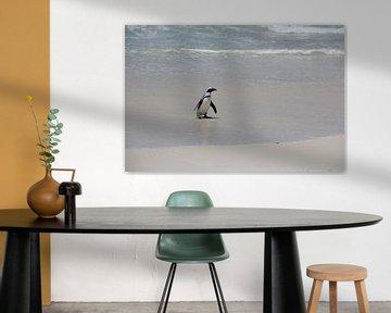 Pinguin dockt an von Quinta Dijk