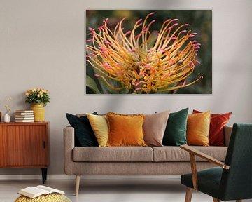 Afrikanische Blume von Quinta Dijk