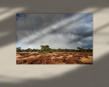 Regenwolken en regenboog boven de Veluwe van Wim Stolwerk