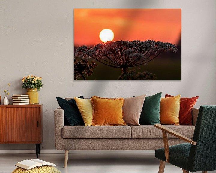 Impression: Le soleil se repose sur la plante (soleil couchant) sur Devlin Jacobs
