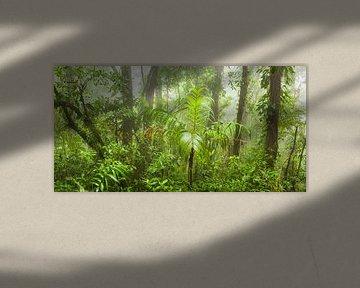 Tropischer Nebelwald von Chris Stenger