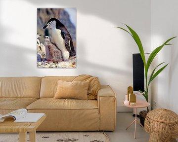 Liggende pinguïn met kuikens van Tom River Art