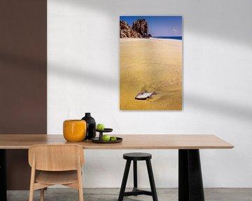 Dode vissen op het strand - analoge fotografie! van Tom River Art