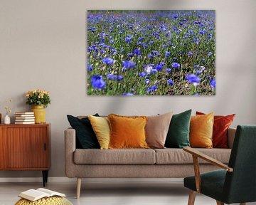 Kornblumenfeld von Karina Baumgart